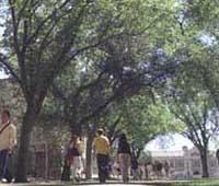 サスカチュアン大学